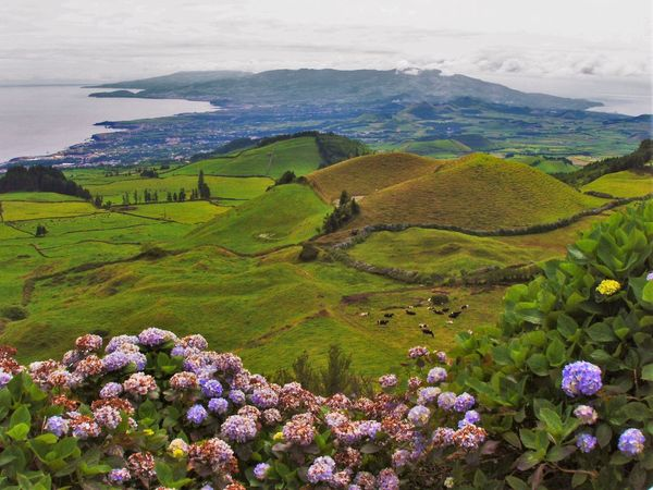 Azores Azores Islands Azores, S. Miguel Beauty In Nature Field Green Color Hydrangea Hydrangea In Bloom Idyllic Landscape Mountain Nature Rural Scene Tranquility Travel Travel Photography Idilic Landscape_Collection Landscapes Showcase April The Great Outdoors - 2016 EyeEm Awards Feel The Journey