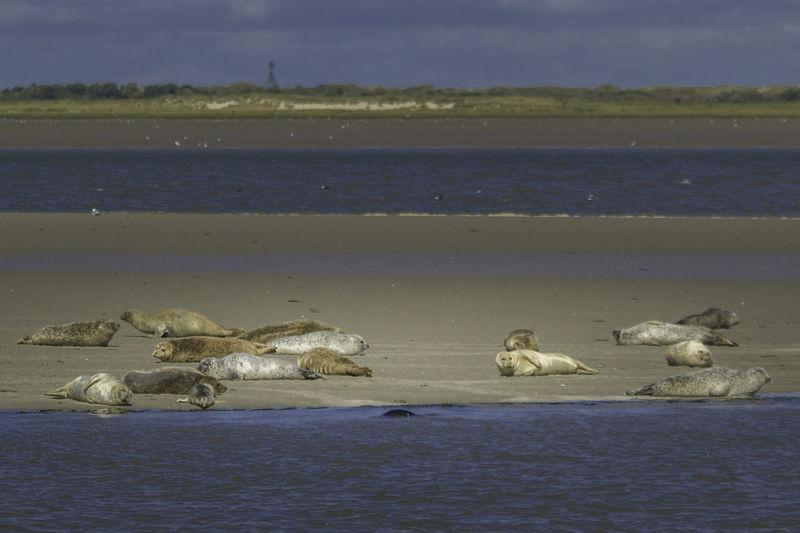 Chilling seals