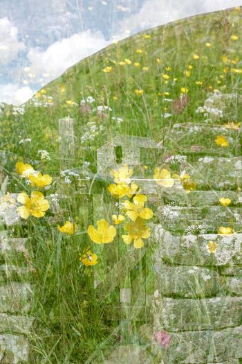 Flower meadow layered image Digital Composite Multiple Exposure Representation Multiple Exposure Multiple Image Layering In A Single Photographic Shot Plant Beauty In Nature Growth Flower Yellow Flowering Plant No People