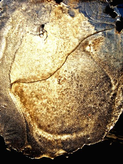Eisplatte im Sonnenlicht Eisplatte Sonnenlicht Sunlight Ice No People Close-up Day Outdoors Animal Themes Freshness