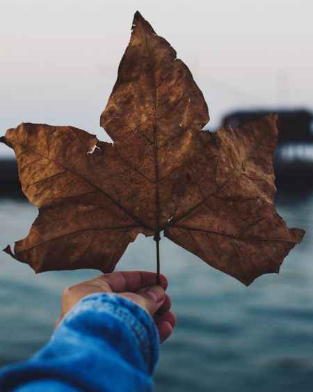 Cropped hand holding dry maple leaf against sky