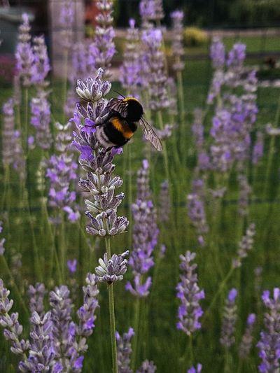 Buzzing Flower