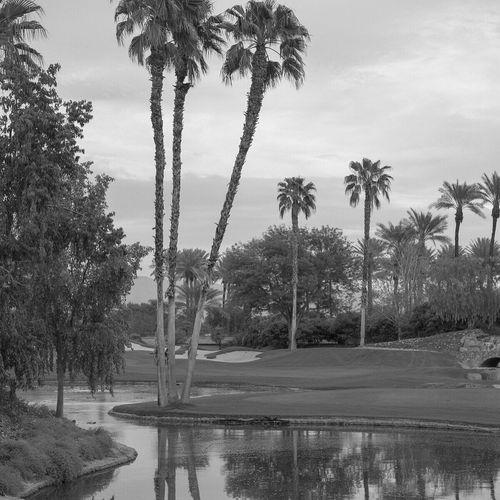 Palm Trees Palm Springs CA. Blackandwhite