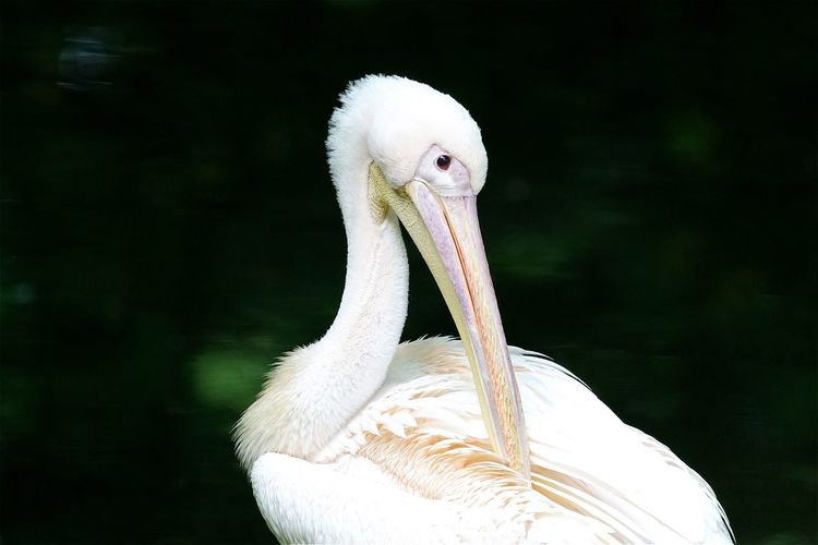 Close-up of white stork on field