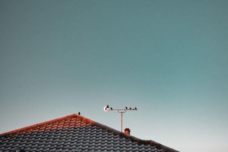 Birds, moon, roof, tv antenna