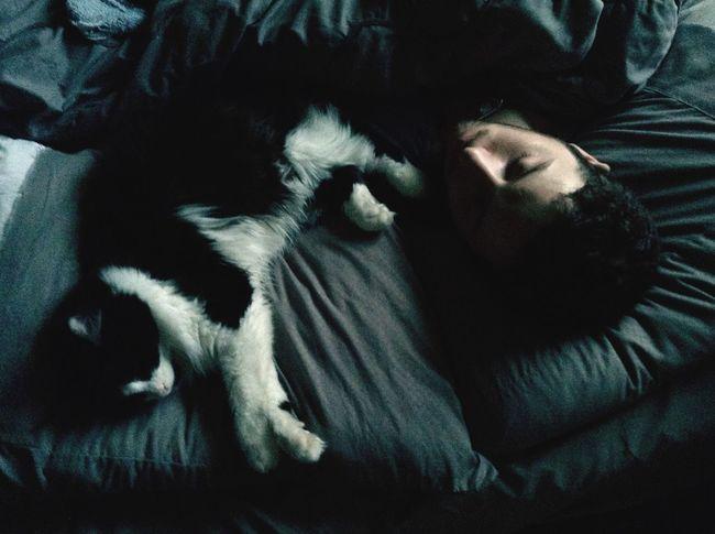 Sleeping Eye4photography  Cats Catsofinstagram