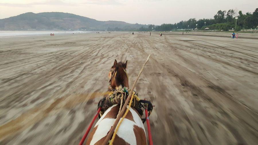 Horse running at sandy beach against sky