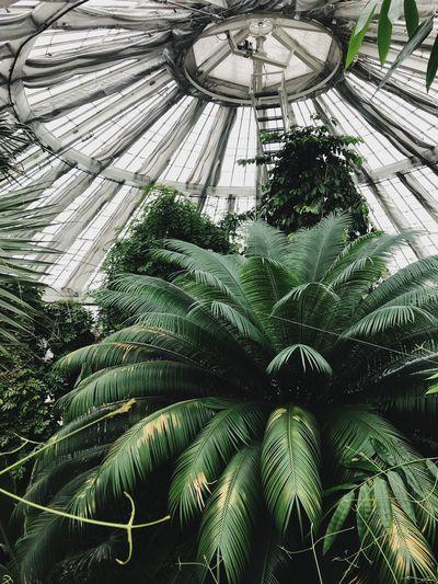 Botany Europe