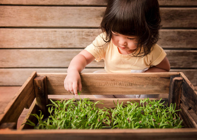 Close-Up Of Baby Girl By Plants In Wooden Crate