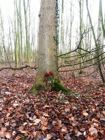An unexpected memento of love? Roses Fotofantast Memento Forrest Taking Photos Love Lost Love