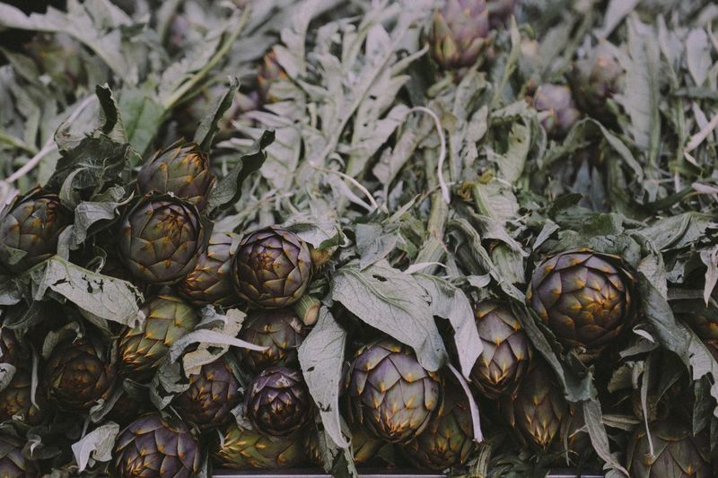 Food And Drink No People Food Artichoke Healthy Eating Day Freshness Outdoors Close-up Nature Market Market Stall Choice Sicily Palermo