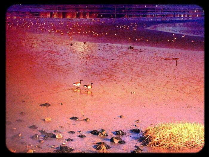 Beach Birdwatching Coastline Water Reflections