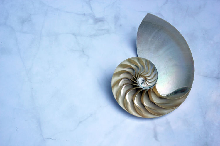 High angle view of seashell on white background