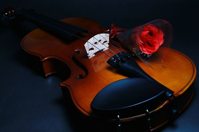 Close-up of rose on violin at table