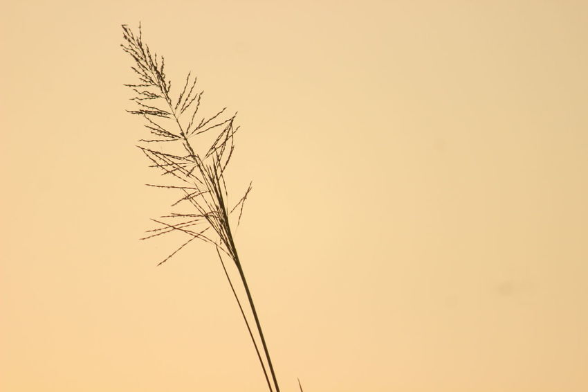Simple Sunset Flying Silhouette Rural Scene Sky Close-up Blooming Pollen