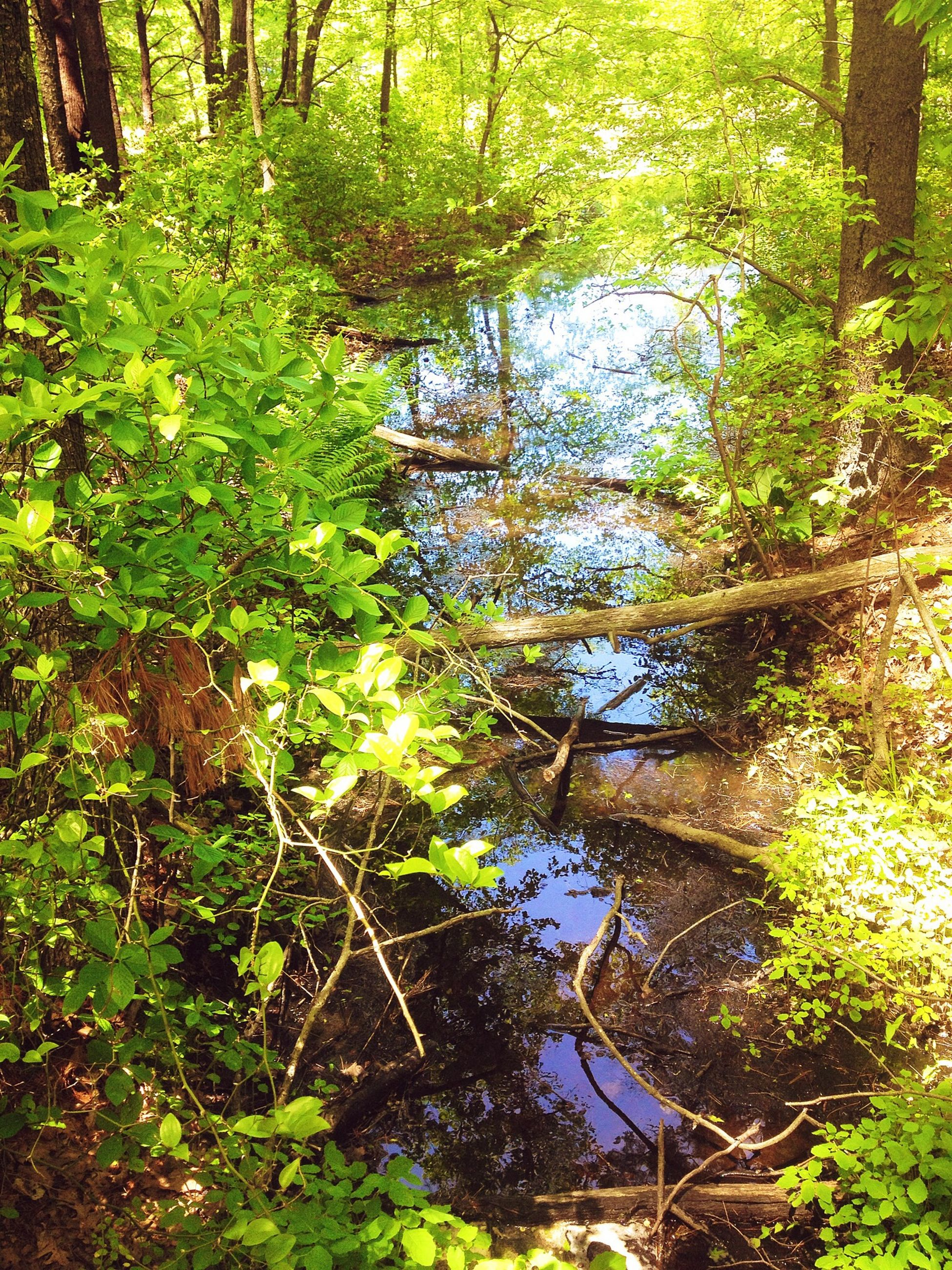 tree, growth, green color, forest, tranquility, tree trunk, nature, tranquil scene, beauty in nature, water, branch, scenics, lush foliage, moss, plant, green, woodland, idyllic, day, non-urban scene
