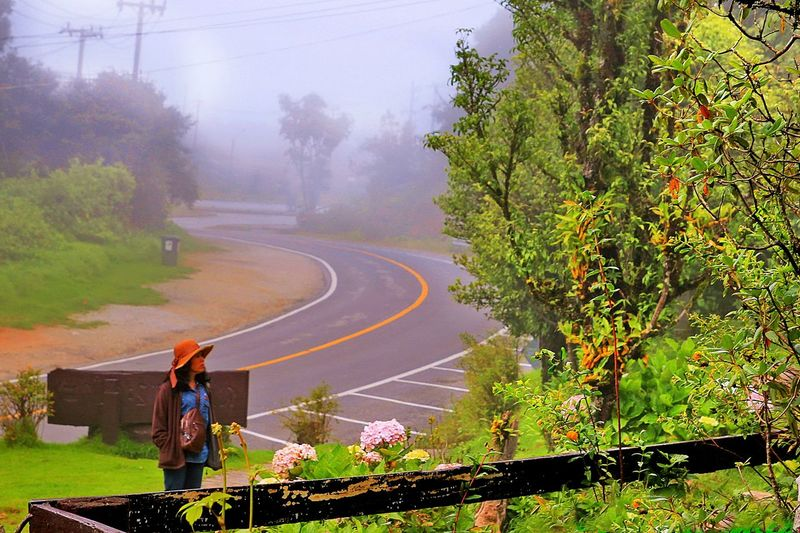 Woman standing by road against trees during foggy weather