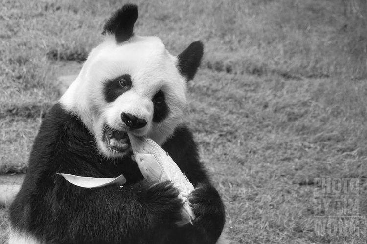 One Animal No People Outdoors Portrait Pets Nature Close-up Tim Wong Sony Nature Hong Kong Panda