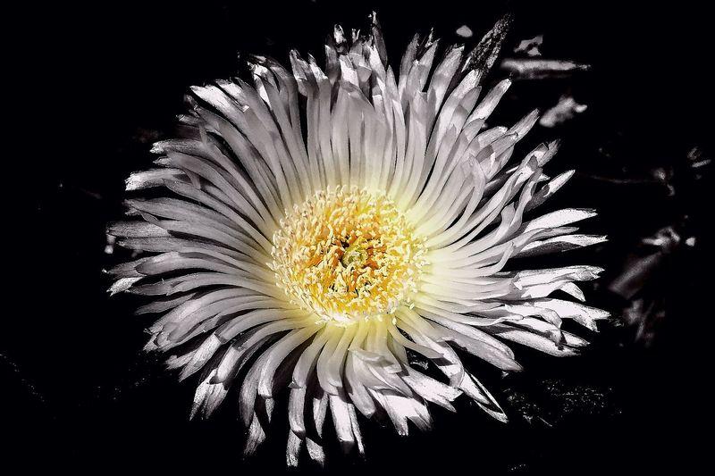 Flower Spotcolor