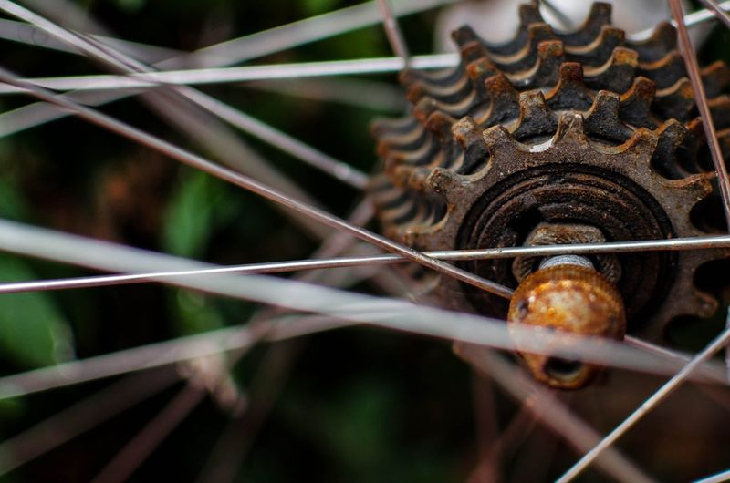 Rust Bicycle Taking Photos