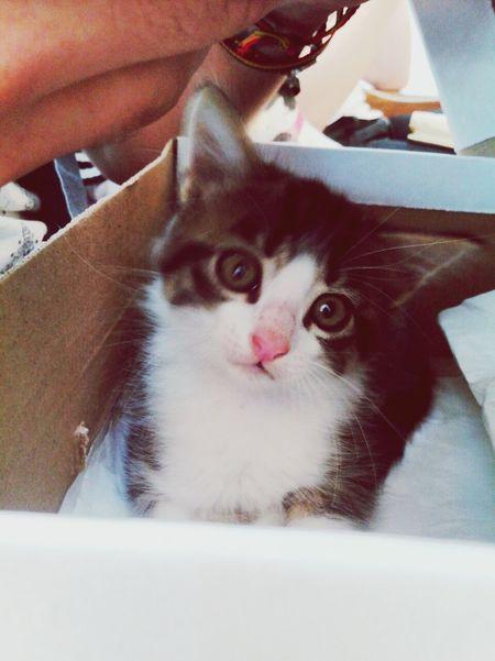 Cat♡ Baby Cute