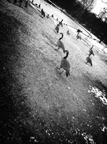 DuckPark  First Eyeem Photo