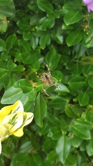 Flower Leaf Spider Web Spider Insect Web Close-up Animal Themes Green Color Plant