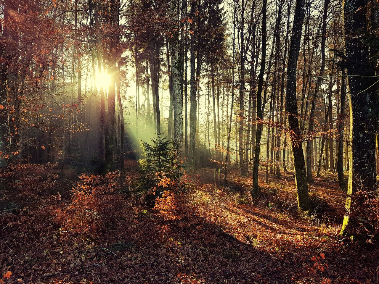 forest, tree, nature, tranquil scene, tranquility, autumn, tree trunk, no people, beauty in nature, scenics, change, day, woodland, sunlight, landscape, growth, branch, outdoors