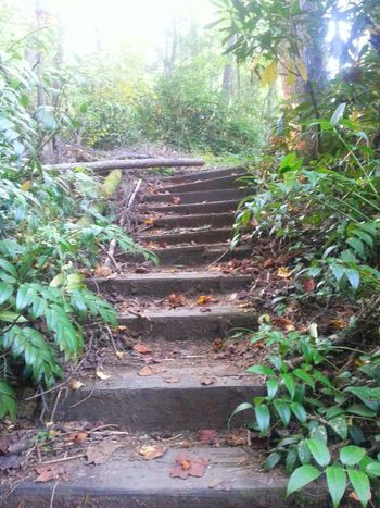 Best Of Stairways Nature_collection Great Outdoors Taking Photos Going Up Check This Out EyeEm Nature Lover