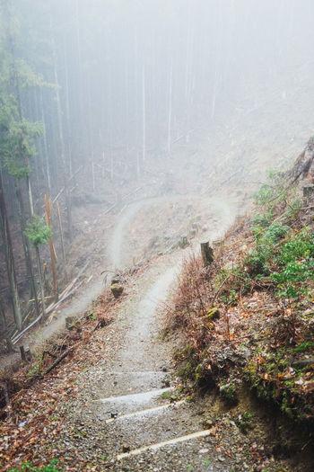 From my book, Koya Bound: bit.ly/koyabound-kickstarter Forest Hike Japan Kumanokodo Leica Leicaq Mist Mountain Mountains Onsen Trees Walk