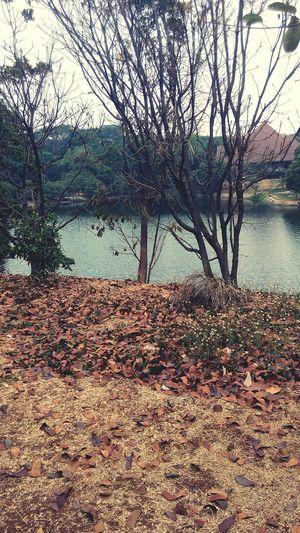And here goes nothing.... University Lake