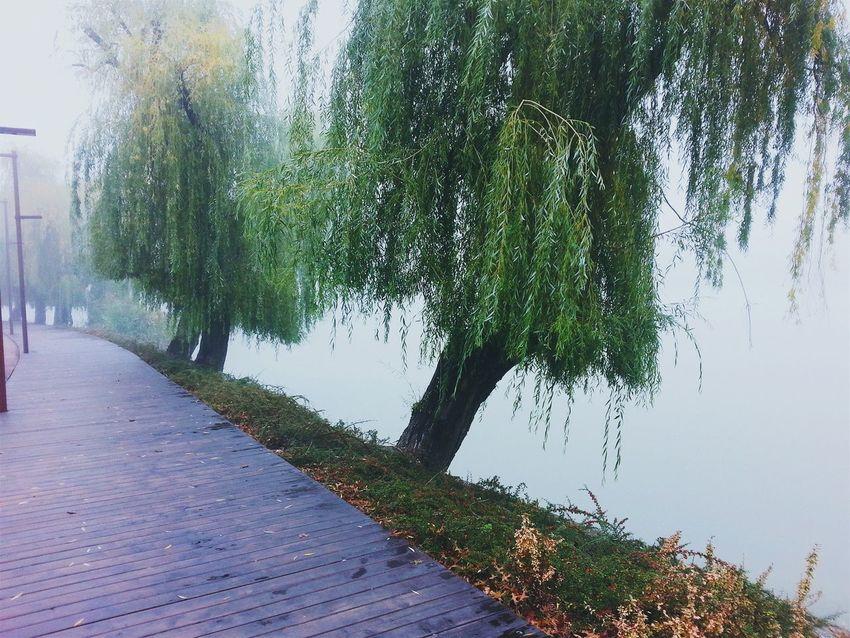 Walking around the lake Lake Melancolia Fog Morning Romania Cluj-Napoca