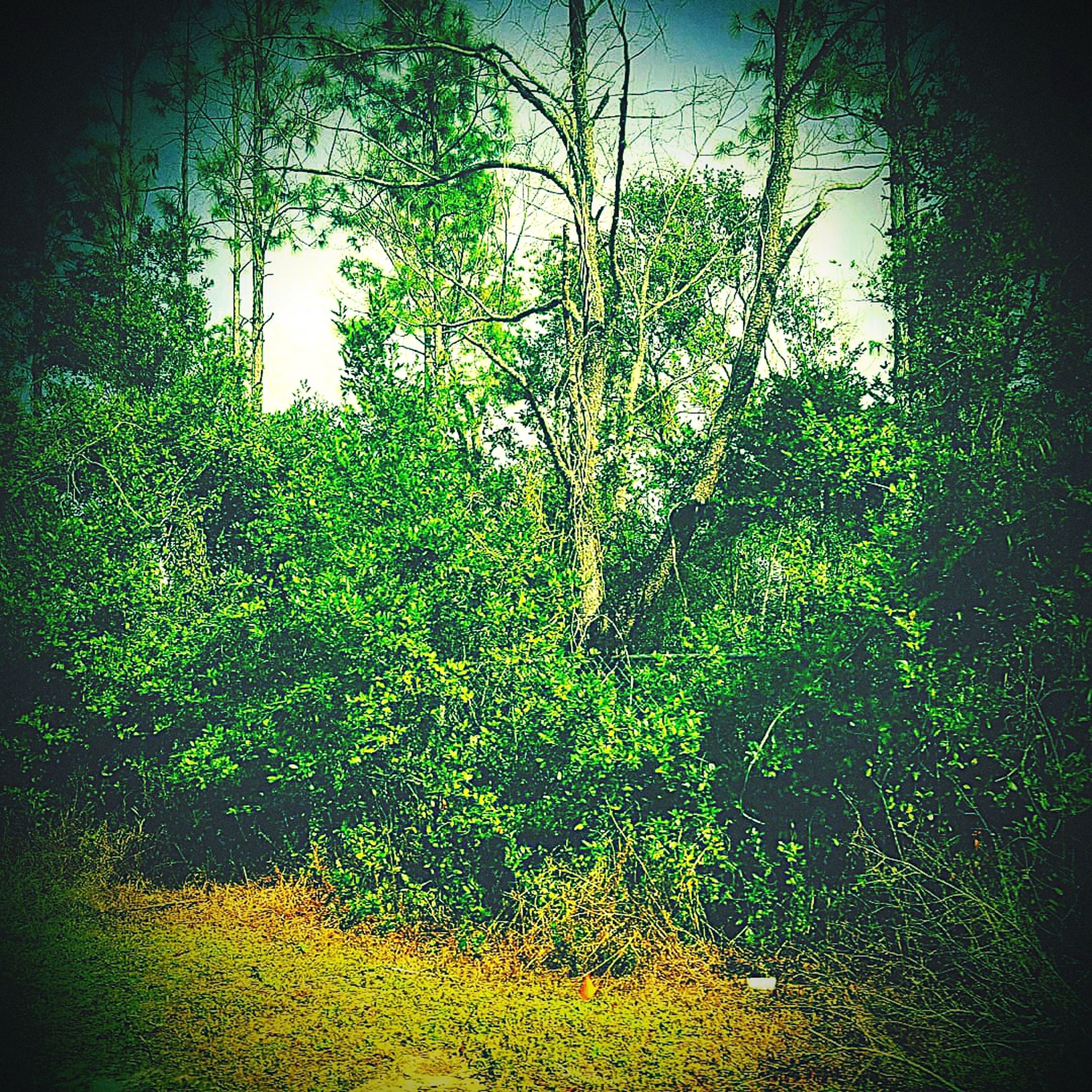 tree, plant, growth, nature, forest, no people, tranquility, land, green color, beauty in nature, day, outdoors, sunlight, vignette, auto post production filter, scenics - nature, branch, green, foliage, tranquil scene