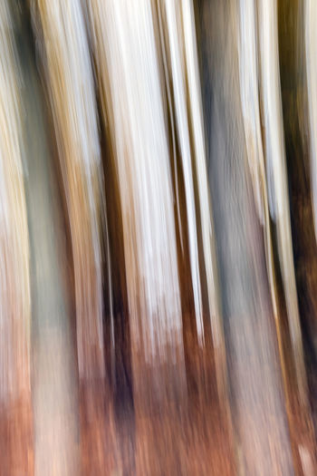 Autumn Hues Abstract Backgrounds Full Frame No People Abstract Close-up Pattern Textured  Silver Colored Day Blurred Motion Abstract Backgrounds Motion Long Exposure Brown Speed Nature Hair Environment Outdoors Striped Refraction Flowing