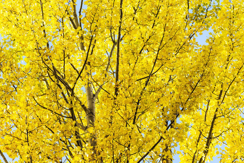 Low angle view of yellow tree against sky during autumn