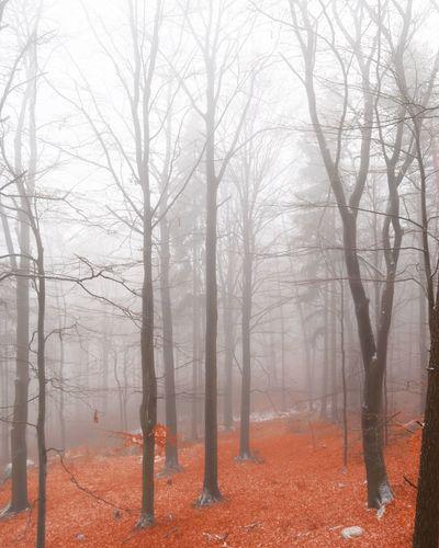 Tree Fog Nature Czech Republic Liberec Olympus OlympusPEN Forest Fire