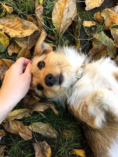 Pets One Animal Dog Animal Themes Personal Perspective Domestic Animals Holding Outdoors Day Leaf Close-up Fall Fall Leaves Puppy Dog Love Lovely Dog Life Be. Ready.