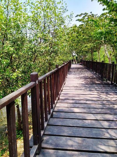 jogging track Elandra Tree Footbridge Sunlight Shadow Wood - Material Railing Safety Sky Green Color Grass Wood Paneling Pathway Walkway Treelined Fence The Way Forward Narrow Wood