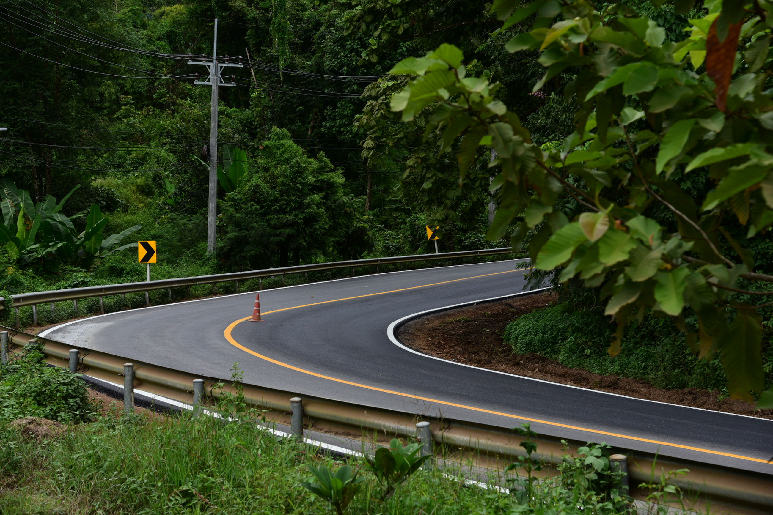 curve, tree, no people, growth, nature, road, traffic circle, outdoors, day