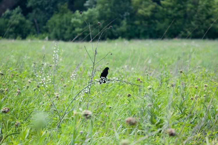 Close-up of bird perching on grass