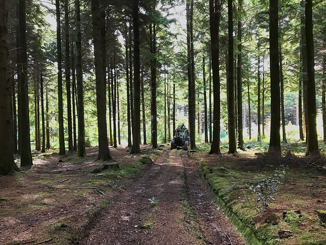 Ways Of Seeing EyeEm Gallery Trees Woods Track WoodLand Tractor Tranquility Wheels Nature Beauty Surrounds You Daily Walk Idless Woods Muddy Summer Truro Forestry Commission Haven For Wildlife Ideal For Cycling, Walking, Horse Riding, Orienteering Woodland Trust Woodland Trail Lost In The Landscape