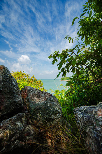 Plants growing on rocks by sea against sky