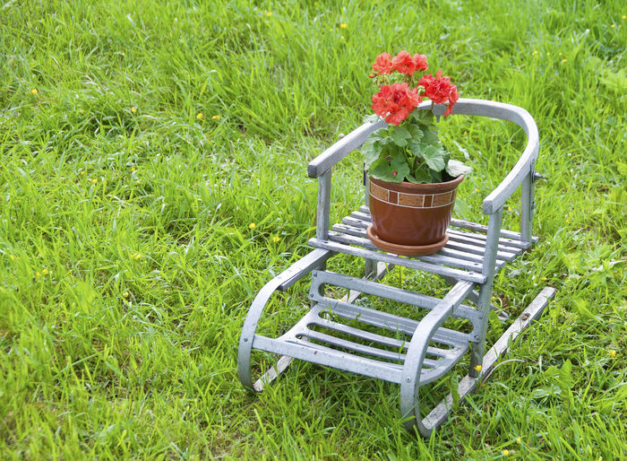 Grass Flower Green Color Nature Outdoors High Angle View Beauty In Nature Freshness Plant Transportation Vase Cantry Cantryside Growth Basket Front Or Back Yard No People Field Day Red Sommer Sledge Old Sled Works
