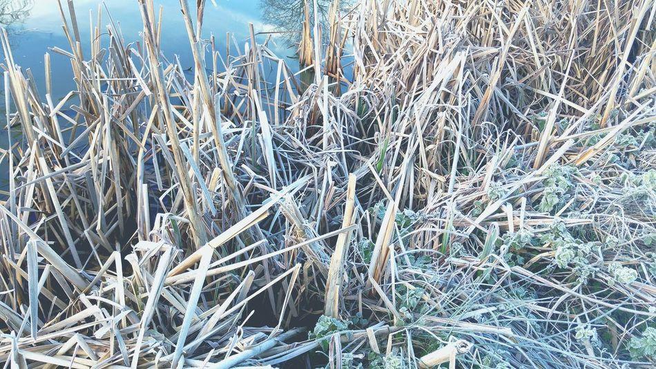 My Fishing Spot BRRRR ❄️ -3 Freezing Cold Frosty Lake Bullrushes