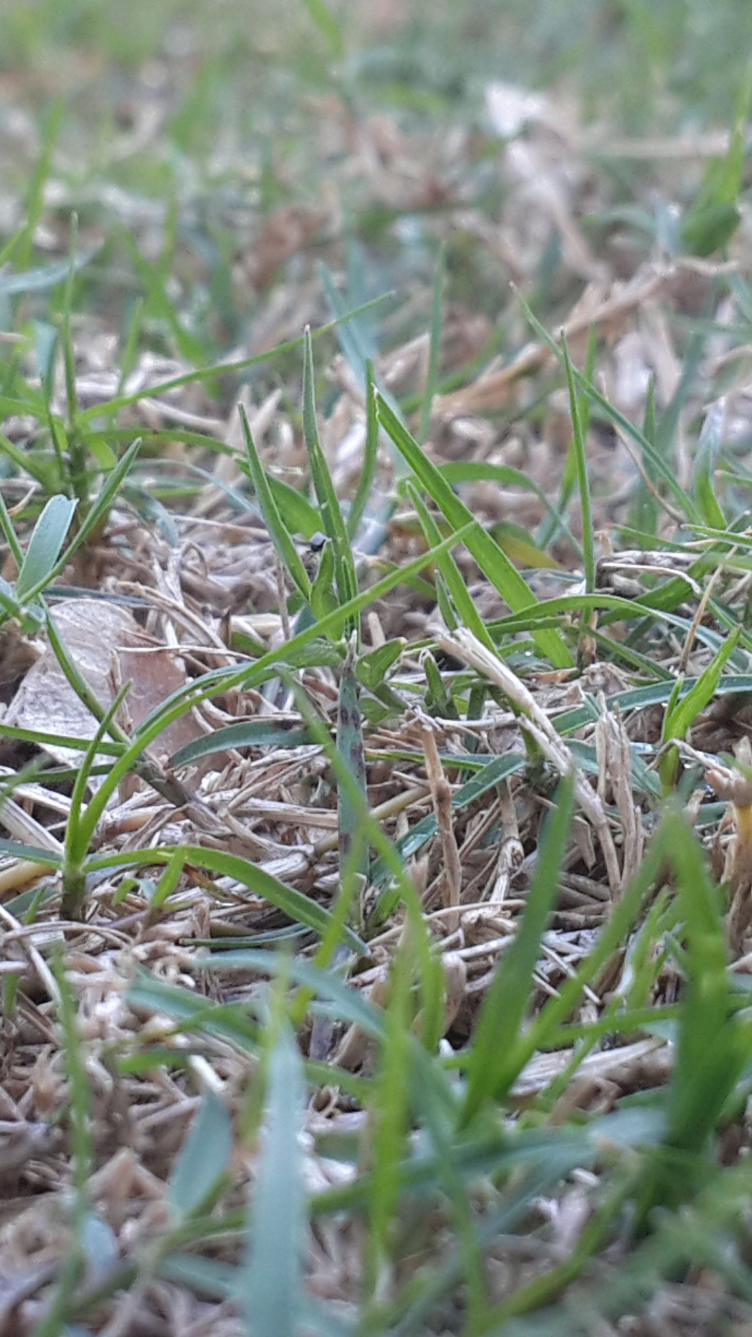 grass, field, growth, selective focus, nature, plant, close-up, green color, grassy, focus on foreground, blade of grass, day, beauty in nature, outdoors, tranquility, high angle view, no people, growing, surface level, leaf