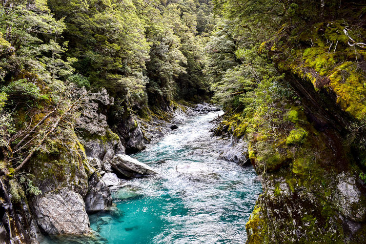 Blue pool walks, NZ. EyeEm Best Shots EyeEm Nature Lover Turquoise Colored Aqua Beauty In Nature Day Flowing Flowing Water Forest Land Motion Nature No People Non-urban Scene Outdoors Plant Power In Nature River Rock Scenics - Nature Solid Stream - Flowing Water Tree Water Waterfall