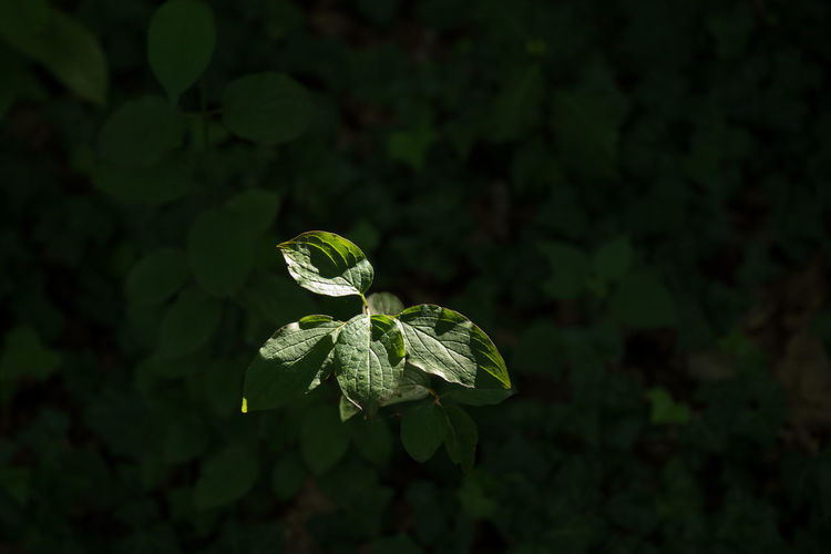 Sunny day outside Dark Background Day Forest High Angle View High Contrast Leaves Light Puddle Nature New Life No People Outdoors Outdoors Photograpghy  Summertime Wood - Material
