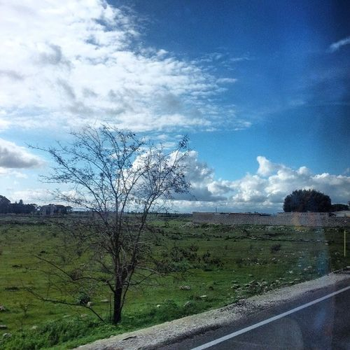 Fromthebus  Salento Lecce Igerslecce instalecce instasalento iger nature TagsForLikes sky sun beautiful sunset flowers tree clouds beauty light cloudporn photooftheday green skylovers weather day mothernature