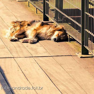 Paranapiacaba. Paranapiacaba Ferrugem Trem Ferrovia Companhiaferroviariadesp Saopaulorailway Beautifulday Beauty Nikontop Nikon Artbaia Photography 50mm Dogstagram Dog Streetdog Cao Cachorro