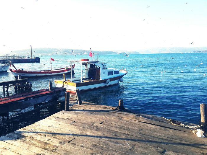 🎈 #birdsinflight #Blue #boat #seagull